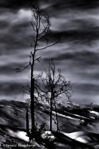 1068 Dusk, Winter, Yellowstone National Park