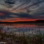 1770 Sunset, Caddo Lake National Wildlife Refuge, Texas