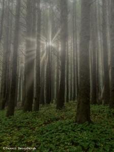 3660 Foggy Morning, Oregon Coast