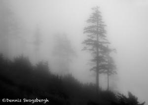 5150 Foggy Morning, Indian Beach, Oregon