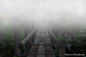 5168 Trail to Smuggler's Cove, Oregon