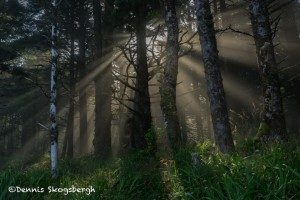 5171 Sunrise, Crepuscular Rays (God Beams), Hug Point, Oregon Coast