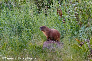 1462 Ground Hog, Aspen, CO