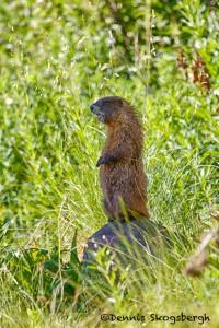 1463 Ground Hog, Aspen, CO