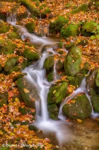 1698 Cascades with Autumn Color