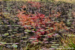 1771 Autumn Reflections