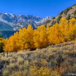 1787 Autumn Colors, Tioga Road