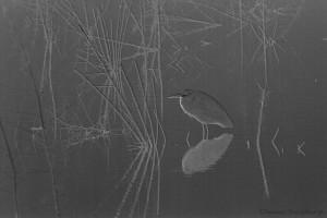 1808 Blue Heron, Foggy Wetlands, Artistic Rendering