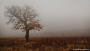1904 Foggy Winter Morning