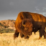 2088 Buffalo