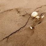 2110 White Desert Mushroom