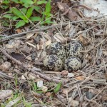 2240 Killdeer Nest