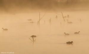 2298 Foggy Sunrise