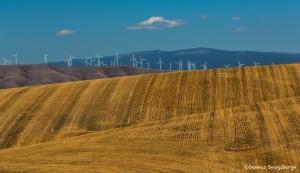 2783 Wind Farm, Wheat Fields, Wasco, Oregon