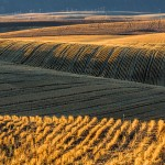 2786 Wheat Fields, Wasco, OR