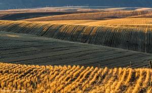 2786 Wheat Fields, Wasco, OR