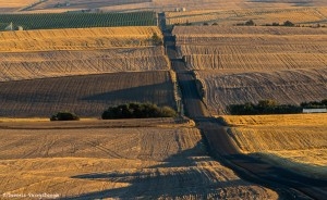 2789 Wheat Fields, Sunset, Wasco, OR
