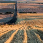 2790 Wheat Fields, Sunset, Wasco, OR
