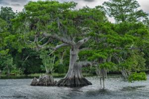 3297 Blue Cypress Lake, Vero Beach, Florida