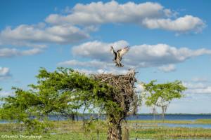 3335 Blue Cypress Lake, Osprey, Vero Beach, Florida