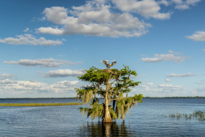 3337 Blue Cypress Lake, Vero Beach, Florida