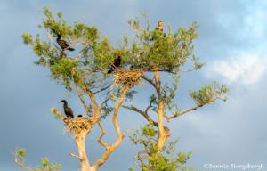 3339 Cormorants, Blue Cypress Lake, Vero Beach, Florida
