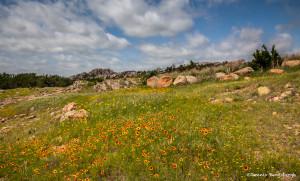 3411 Spring Flowers, Wichita Mountains NW, Lawton, OK