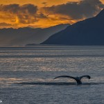 3575 Whale Sunset, Frederick Sound. Alaska