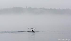 3578 Foggy Whalescape, Alaska