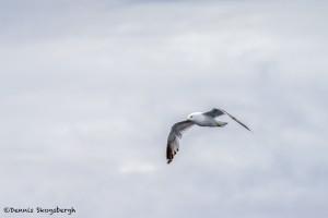 3591 Gull, Alaska