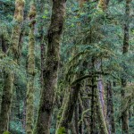 3598 Ecola State Park, Oregon