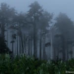 3610 Fog, Indian Beach, Oregon