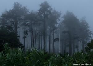 3610 Fog, Indian Beach, Oregon