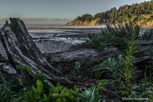 3619 Smuggler's Cove, Oregon Coast
