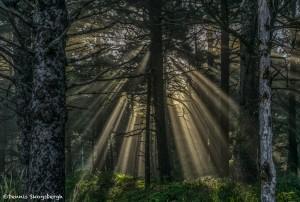 3620 Crepuscular Rays ('God Beams'), Hug Point, Oregon Coast