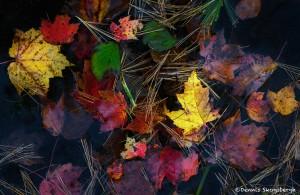 3778 Colored Leaves, Eagle Lake, Acadia NP, ME