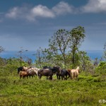 3828 Santa Cruz Island, Galapagos