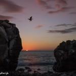 3839 Sunset, Espanola Island, Galapagos