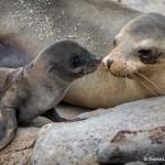 3860 Newborn Sea Lion Pup, San Cristobal Island, Galapagos