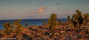 3874 Sunset, South Plaza Island, Galapagos