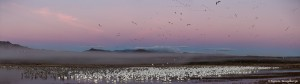 3895 Sunrise Panorama, Before Morning Fly-out, Bosque del Apache, New Mexico