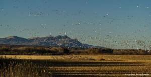 3900 Sunset, Bosque del Apache, New Mexico