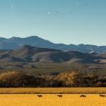 3902 Afternoon Pastoral Scene, Bosque del Apache, New Mexico