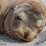 3972 Sea Lion, Espanola Island, Galapagos