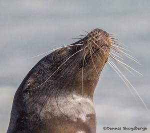 3975 Sea Lion, Espanola Island, Galapagos