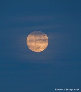 4038 Moonrise, Bosque del Apache NWR, New Mexico