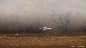 4040 Foggy Morning, Bosque del Apache, New Mexico
