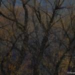 4042 December Foliage, Bosque del Apache, New Mexico