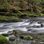 4239 Cascades, Rainforest, Vancouver Island, BC