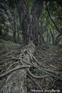 4314 Rainforest, Maui, Hawaii